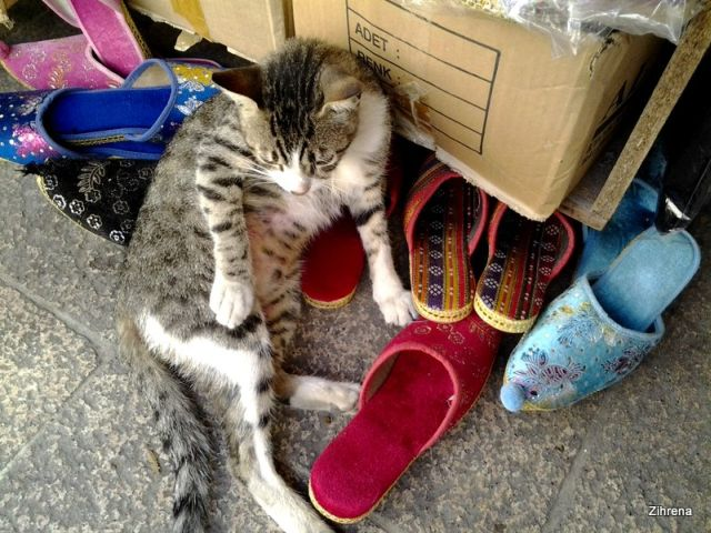 Cats prevail in Istanbul