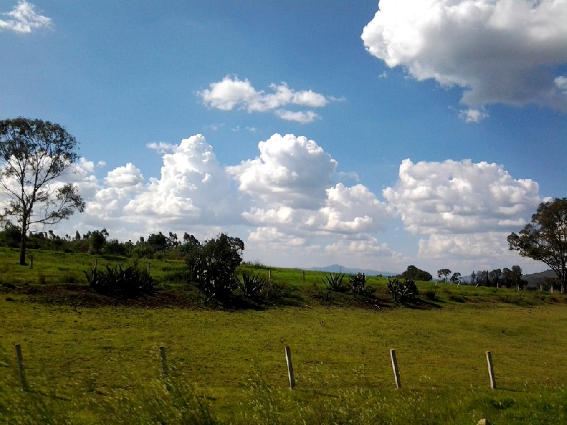 Arco Norte fields
