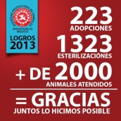 2013 Annual Report--Animal Shelter