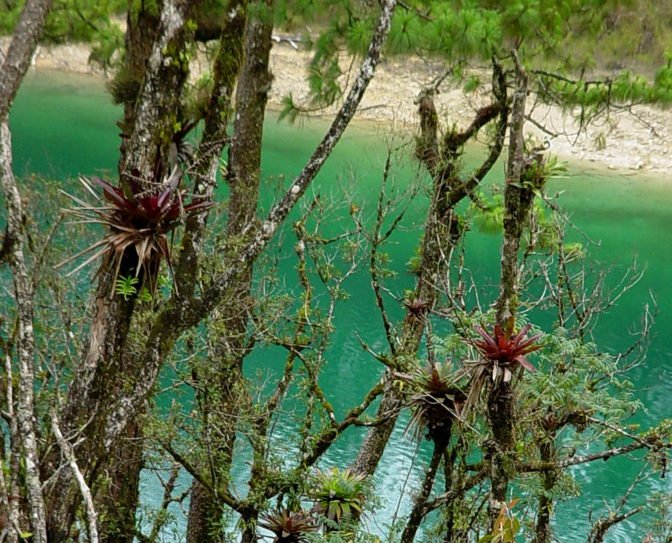 Chiapas Legado Verde Photographic Initiative