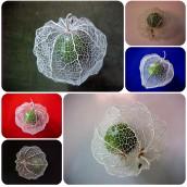 A Singular Seed Pod